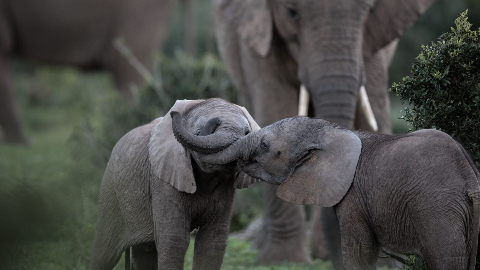 Safari South Africa Kruger Park To Garden Route Natucate